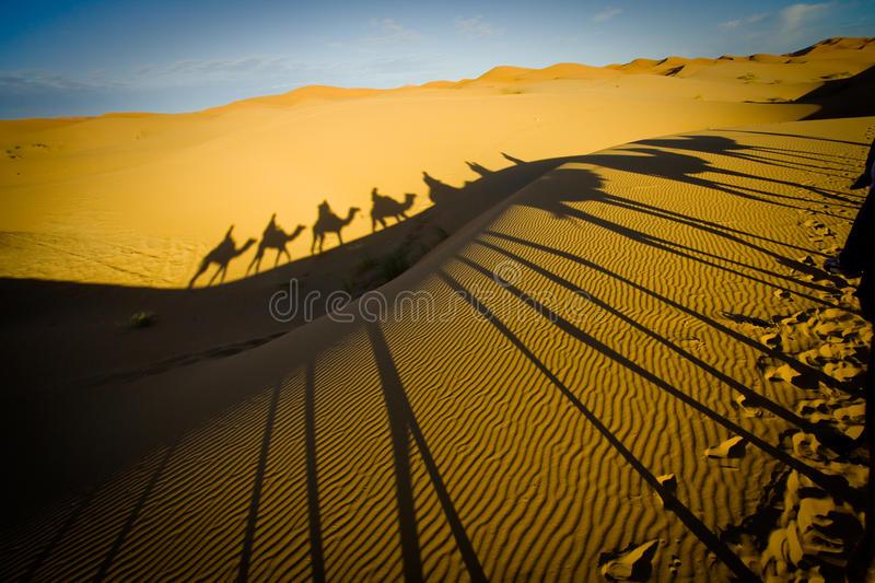 caravana-del-camello-en-el-desierto-de-sáhara-18148019