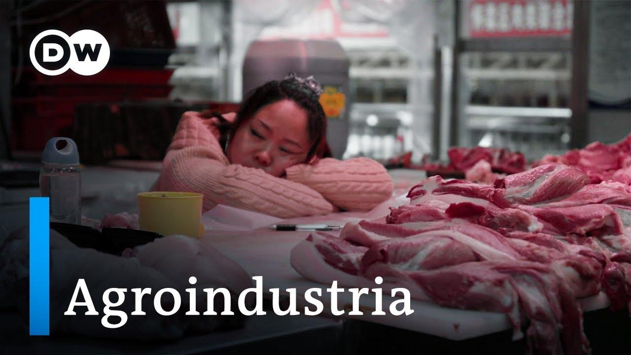 El negocio mundial de la alimentación | DW Documental