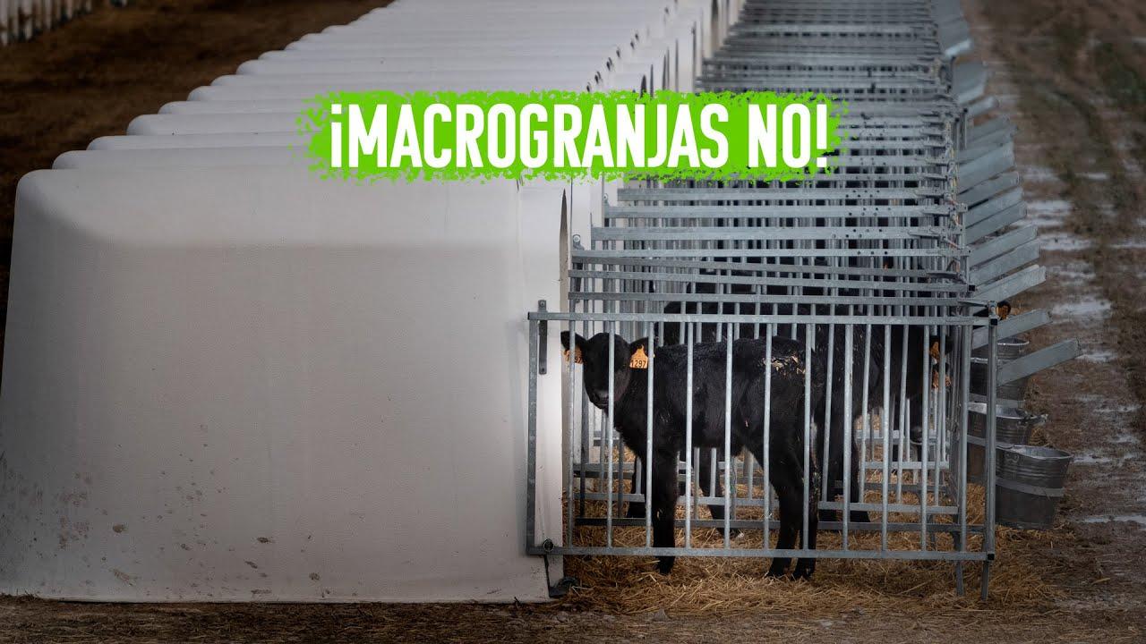 ¡Macrogranjas NO! Ni en Caparroso, ni en Noviercas, ni en ningún sitio